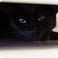 Adopt A Pet :: Carmen - Boise, ID