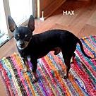 Adopt A Pet :: Max + Yodie - Denton, TX