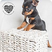 Adopt A Pet :: Skittles - Inglewood, CA