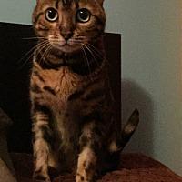 Adopt A Pet :: Asia - Toronto, ON