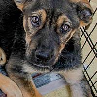 Adopt A Pet :: Larry - Washington, DC