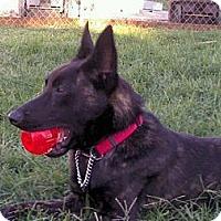 Adopt A Pet :: Gunnar in Southern CA - Jamestown, CA