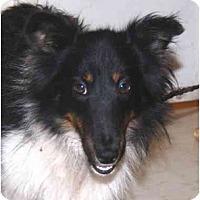 Adopt A Pet :: Josh - Sterling, VA