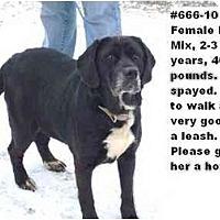 Adopt A Pet :: # 666-10 @ Animal Shelter - Zanesville, OH