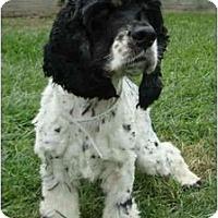 Adopt A Pet :: Dooney - Sugarland, TX