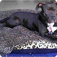 Adopt A Pet :: Nala.loves humans - Sacramento, CA
