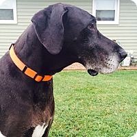 Adopt A Pet :: Penny - Phoenixville, PA