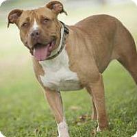 Adopt A Pet :: Pennington - Spring City, PA