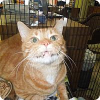 Adopt A Pet :: Garfield - Medina, OH