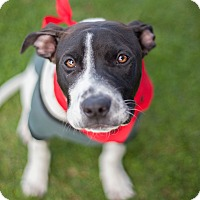 Adopt A Pet :: Dante-ADOPT Me! - Redondo Beach, CA