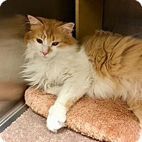 Adopt A Pet :: Jessie-Adoption Pending! - Colmar, PA