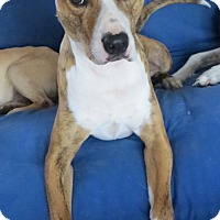 Adopt A Pet :: Tigger - Matthews, NC