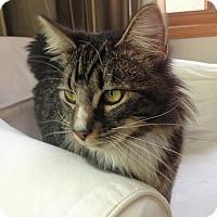 Adopt A Pet :: Tom Sawyer - Vancouver, BC