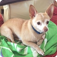 Adopt A Pet :: Danny - Battle Ground, WA