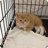 Adopt A Pet :: Chipotle - Brooklyn, NY