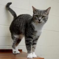 Adopt A Pet :: SUZI - Bucyrus, OH