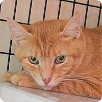 Adopt A Pet :: Goldilocks - Atlanta, GA