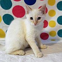 Adopt A Pet :: Basil - sylmar, CA