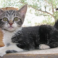 Adopt A Pet :: Tweed - Ruidoso, NM