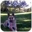 Photo 3 - German Shepherd Dog/Shepherd (Unknown Type) Mix Dog for adoption in Bellflower, California - Maple