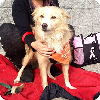 Border Collie Mix Dog for adoption in Trenton, New Jersey - Rhoda