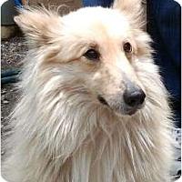 Adopt A Pet :: Rocky - Harrison, AR