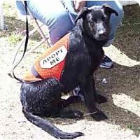 Adopt A Pet :: Sassy,FL - Miami Beach, FL