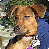 Adopt A Pet :: Lucy - Stroudsburg, PA