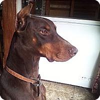 Adopt A Pet :: Gunnery Sargent Kibbles and Bi - Allegan, MI