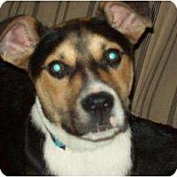 Adopt A Pet :: Robbie - Alliance, NE