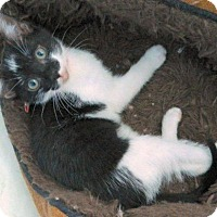 Adopt A Pet :: Puck - The Colony, TX