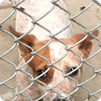 Adopt A Pet :: Hunter - Boulder, CO