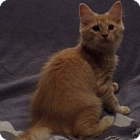 Adopt A Pet :: Buffy - Sterling Heights, MI