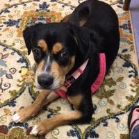 Adopt A Pet :: Mercury - Irmo, SC