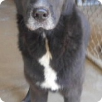 Adopt A Pet :: Blue - Yucaipa, CA