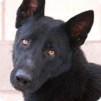 Adopt A Pet :: Dante von Donnerstag - Los Angeles, CA