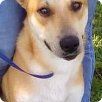 Adopt A Pet :: Fox - Orlando, FL