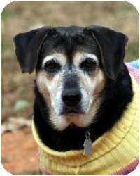 Beagle Mix Dog for adoption in Allentown, Pennsylvania - Baby Reduced