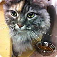 Adopt A Pet :: Jinx - Warminster, PA