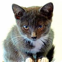 Adopt A Pet :: Cameo - Victor, NY