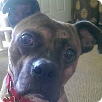 Adopt A Pet :: Titan - Fenton, MI