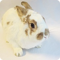Adopt A Pet :: Sunny Beam - Los Angeles, CA