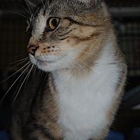 Adopt A Pet :: Calla - Bay City, MI