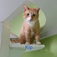 Adopt A Pet :: kip - Muskegon, MI
