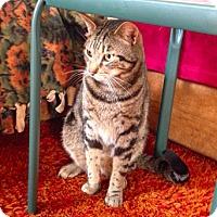 Adopt A Pet :: Bullet - Novato, CA