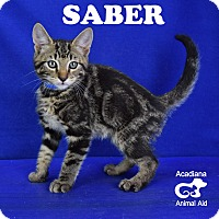 Adopt A Pet :: Saber - Carencro, LA