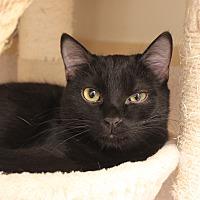 Adopt A Pet :: Dash - Naperville, IL
