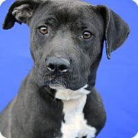 Adopt A Pet :: SABINE - LAFAYETTE, LA
