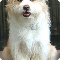 Adopt A Pet :: Theodore - Woonsocket, RI