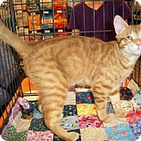 Adopt A Pet :: Leo - Castro Valley, CA